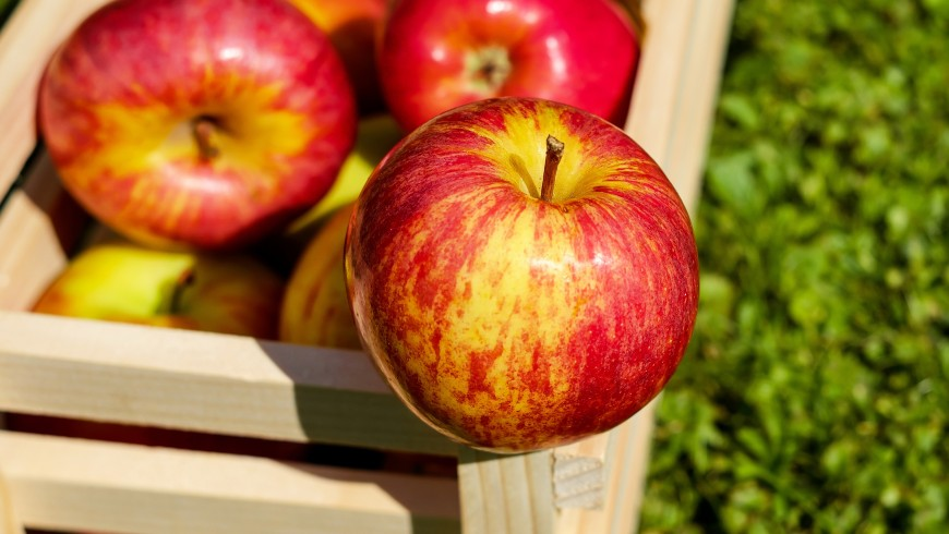 apple-red-fruit-ripe-144245
