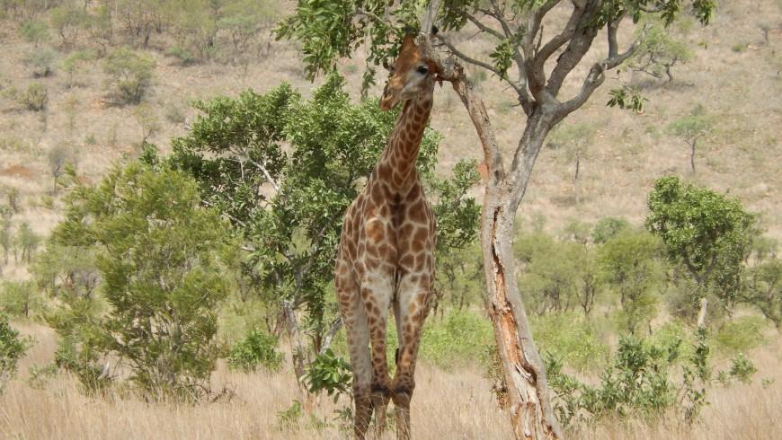 Kruger, tra i parchi nazionali più belli del mondo