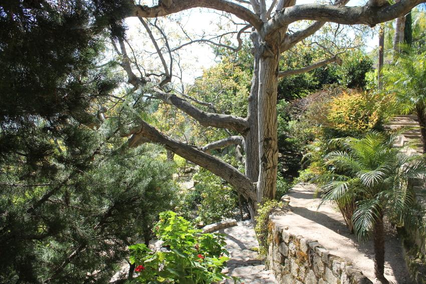 Badolato, Calabria, la vegetazione rigogliosa