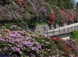 Conca dei Rododendri: tra i parchi più belli d'Italia 2017
