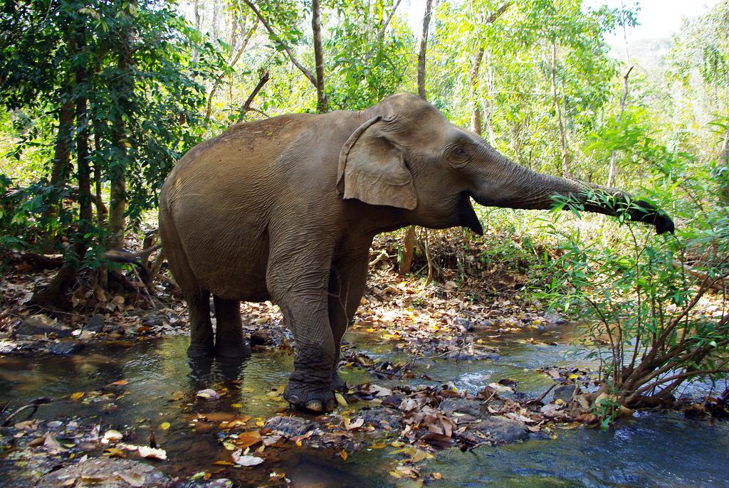 uno degli elefanti della riserva Elephant Valley Project