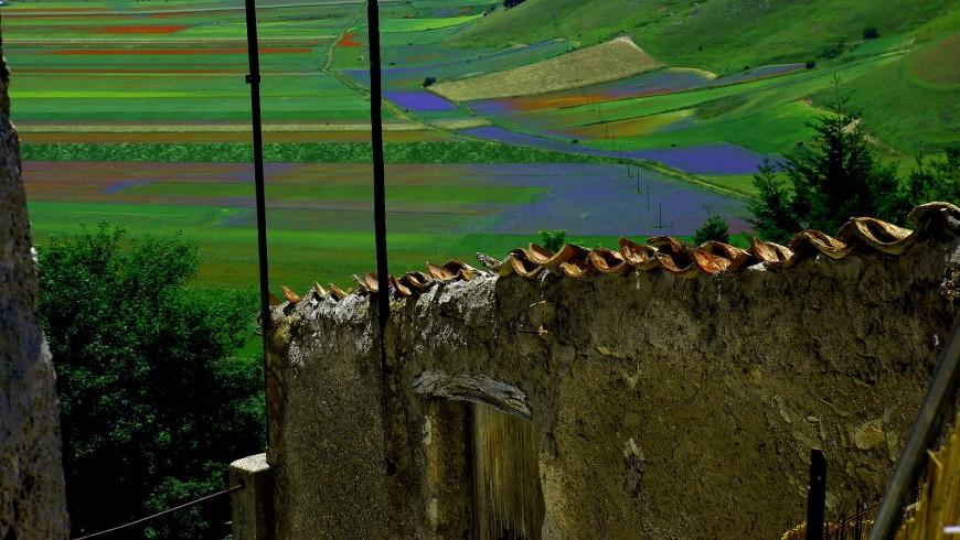 Dopo il sisma torna la fioritura di Castelluccio di Norcia