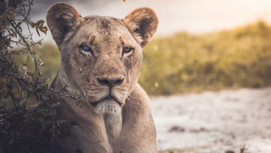 Ecoturismo: una risorsa per la salvaguardia della fauna selvatica