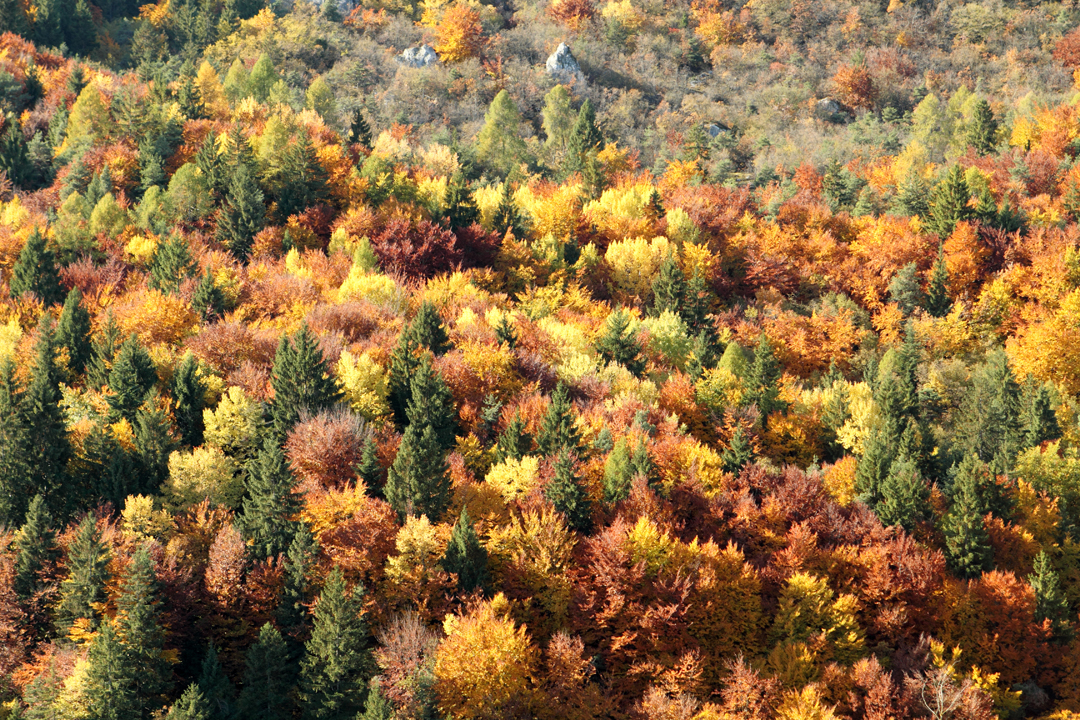 La meraviglia del bosco in Trentino