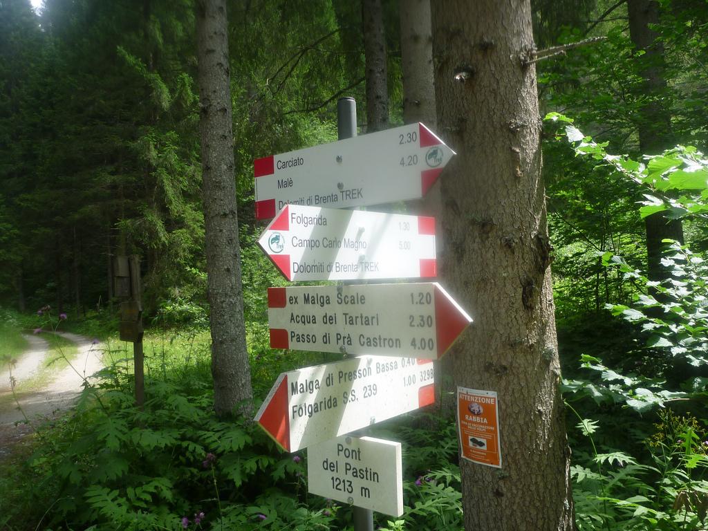 La meraviglia dei boschi in Trentino