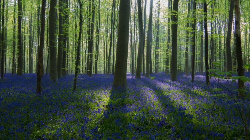 Il bosco Blu del Belgio