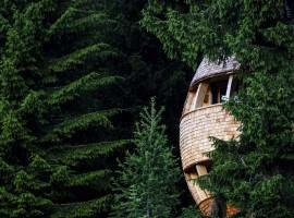 Una spettacolare casa sull'albero a forma di pigna