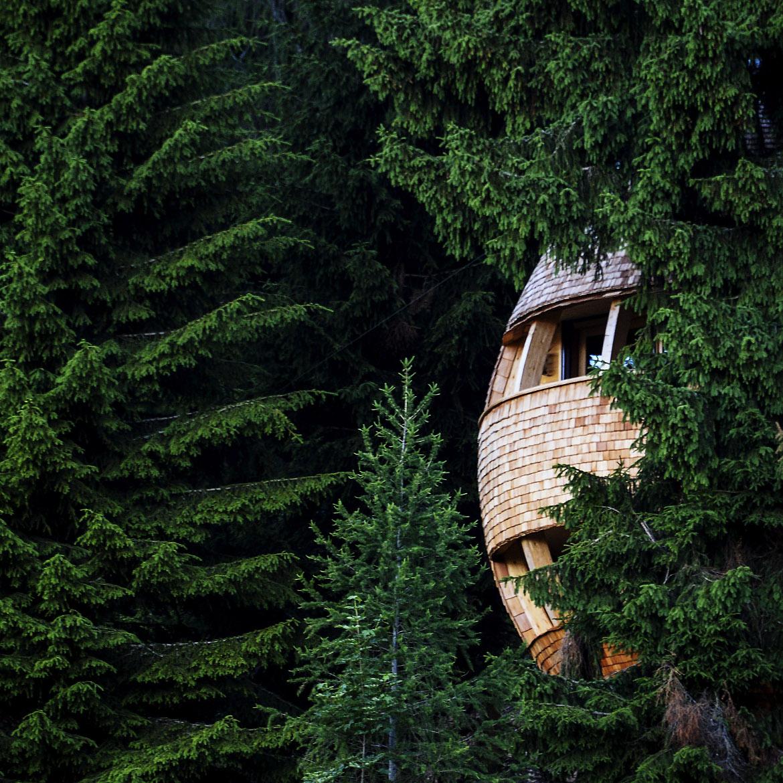 Casa sull'albero circondata dal verde del bosco