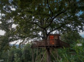 Casa sull'albero della Fattoria La Prugnola, in Toscana