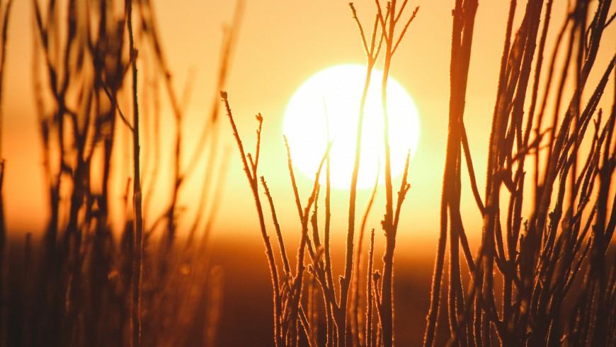 Sole dietro gli alberi - l'energia solare è la più importante forma di energia rinnovabile, foto di Jeremy Bishop via unsplash