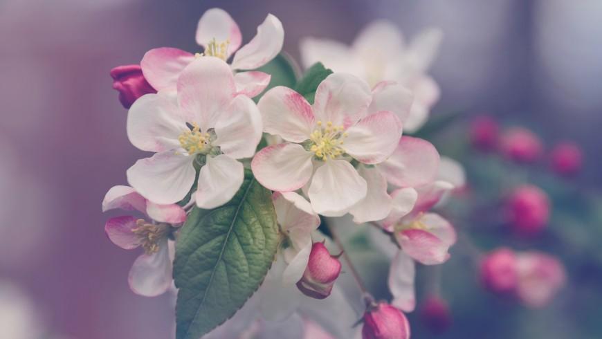 Fiori rosa,foto di Marivi Pazos via Unsplash