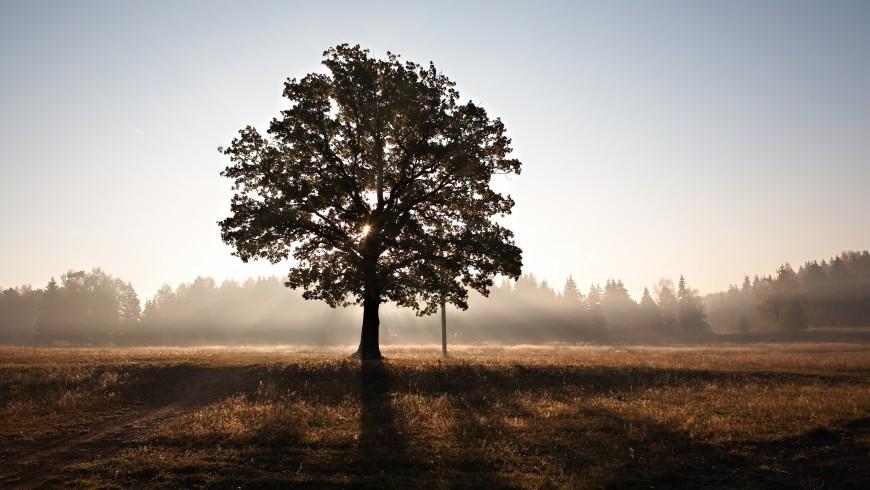 Albero in un campo - è importante preservare gli alberi per un mondo eco-sostenibile, foto di Roman Averin via unsplash