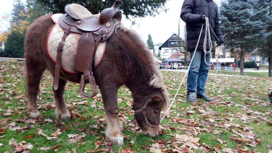 Piccolo pony nel parco di Bled