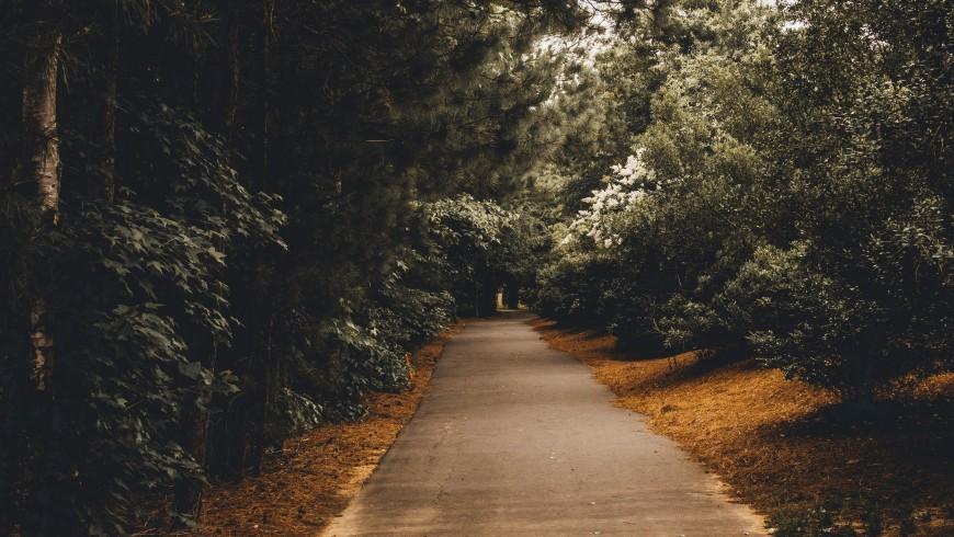 Percorso in mezzo agli alberi, atlante dei cammini, foto di Gui Avelar via Unsplash