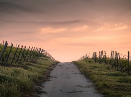 Tramonto su sentiero