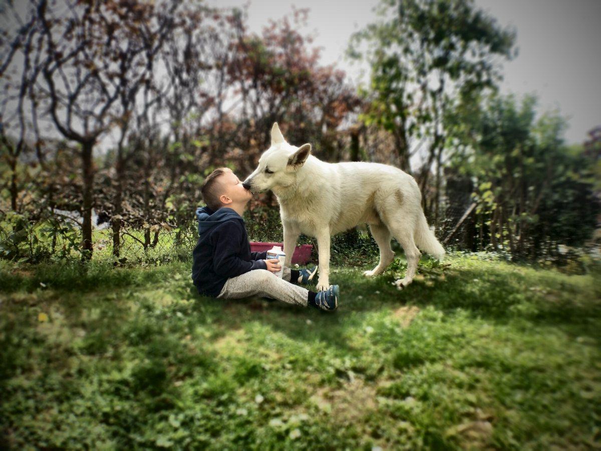 kiss_dog_love_pet_animal_puppy_friendship_cute-1200406