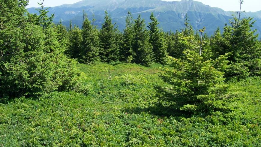 Flora verde sull'Appennino Tosco-Emiliano, vacanze verdi, foto di Wikimedia Commons