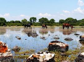 Cavallini della giara, mobilità slow, foto via Il Giardino di Valentina