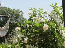 Giardino dell'Agriturismo Poggio Pratelli