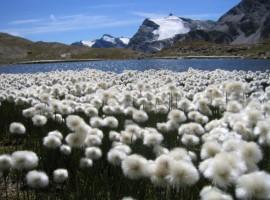 Parco Nazionale Gran Paradiso, a piedi tra le nuvole