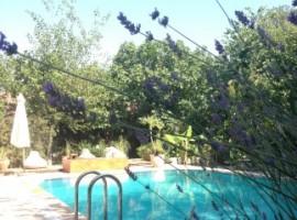 Piscina, Fig Garden Cottage, alloggi verdi