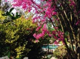 Splendidi alberi fioriti che circondano la piscina, Fig Garden, alloggi verdi