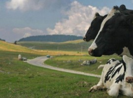 Agriturismo La Fonte: tra montagna, passeggiate su prati verdissimi e vita di campagna