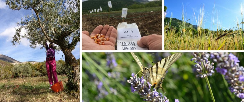 Agriturismo il Querceto biodiversità