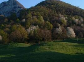 Fare passeggiate tra i verdissimi monti attorno alla Malga