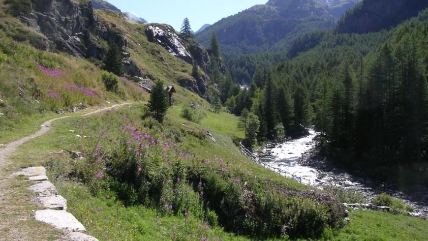 Goilles dessous, nel Vallone Urtier, Cogne , Valle d'Aosta