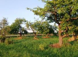 Esperienza rurale in Lettonia