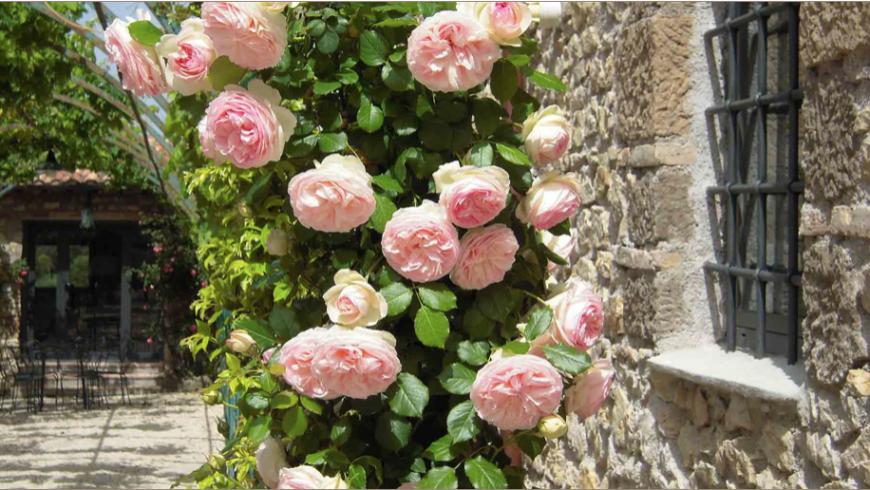 Il giardino con delle rose alla Tenuta Colfiorito