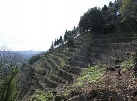 24 ettari di biodiversità sulle pendici dell'Etna