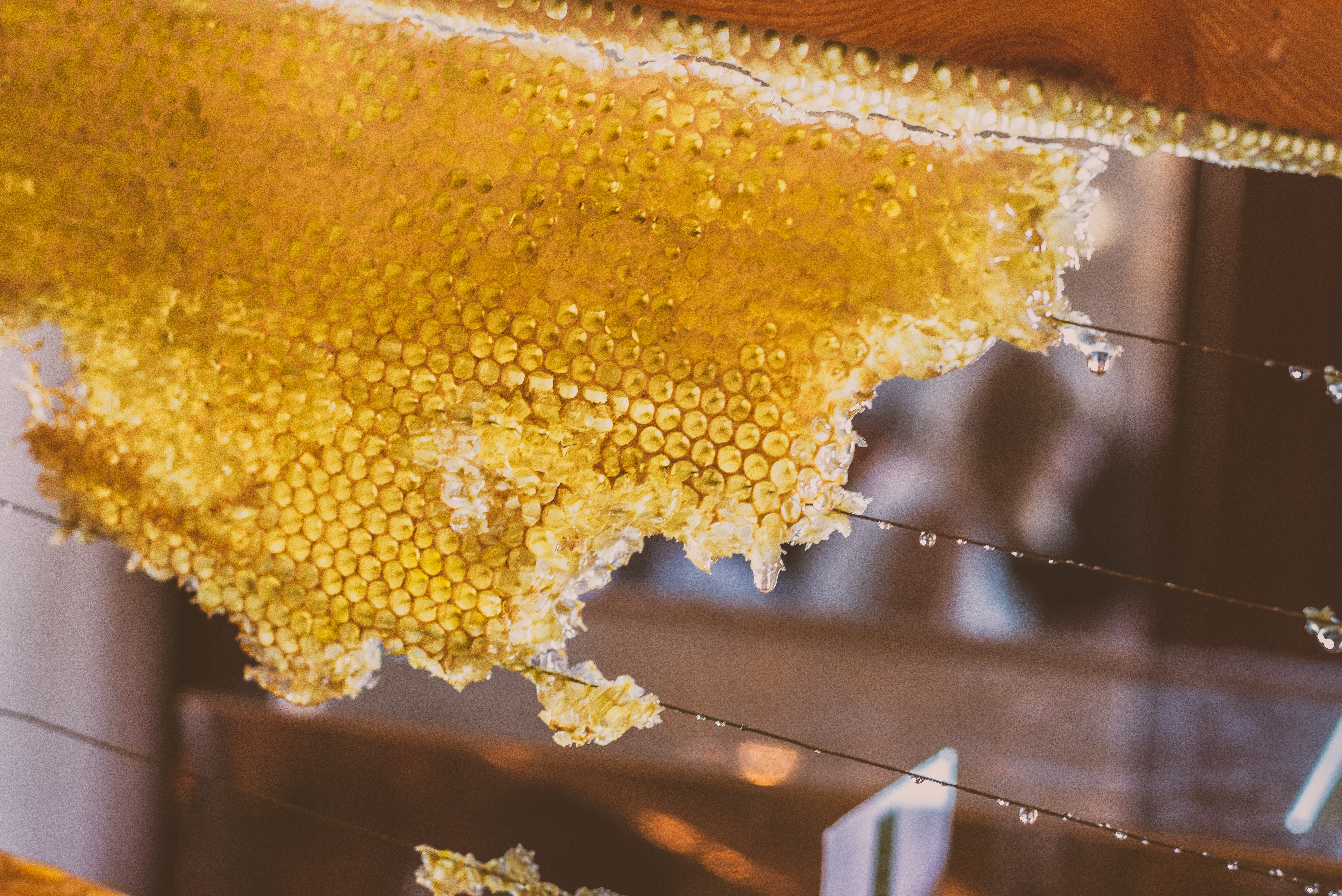 Bees and honeycomb, World Bee Day