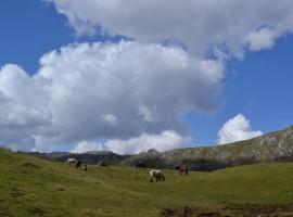 Cavalli liberi tra le vette dell'Appennino Lucano