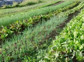 La fattoria dell'autosufficienza: sostenibilità e rispetto per l'ambiente