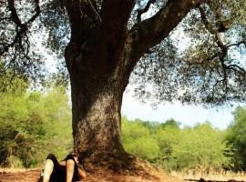 Alla scoperta del Tai Chi e dello Yoga nella campagna di Ostuni, Puglia - Yoga in Sud Italia