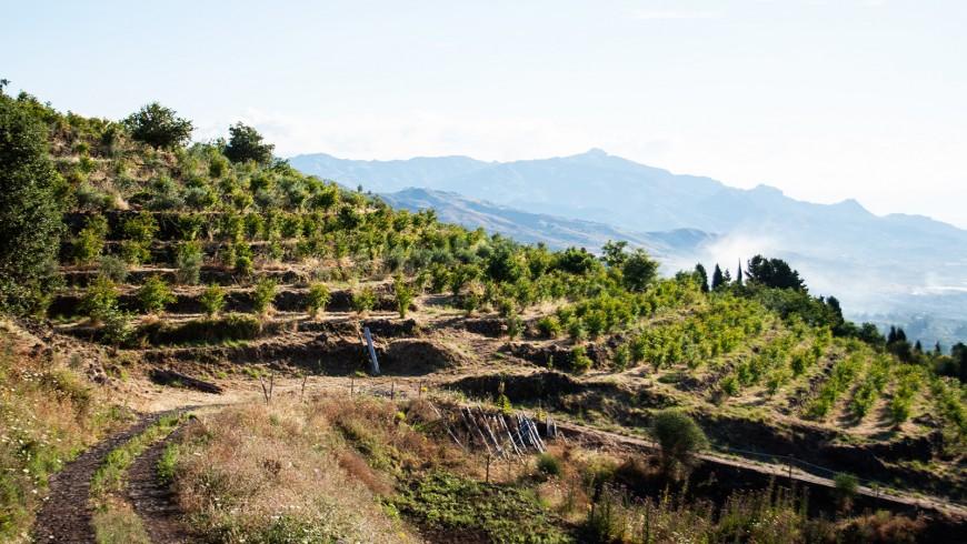 Alla scoperta del cibo italiano sulle pendici dell'Etna: BagloArea, agriturismo biologico e sostenibile