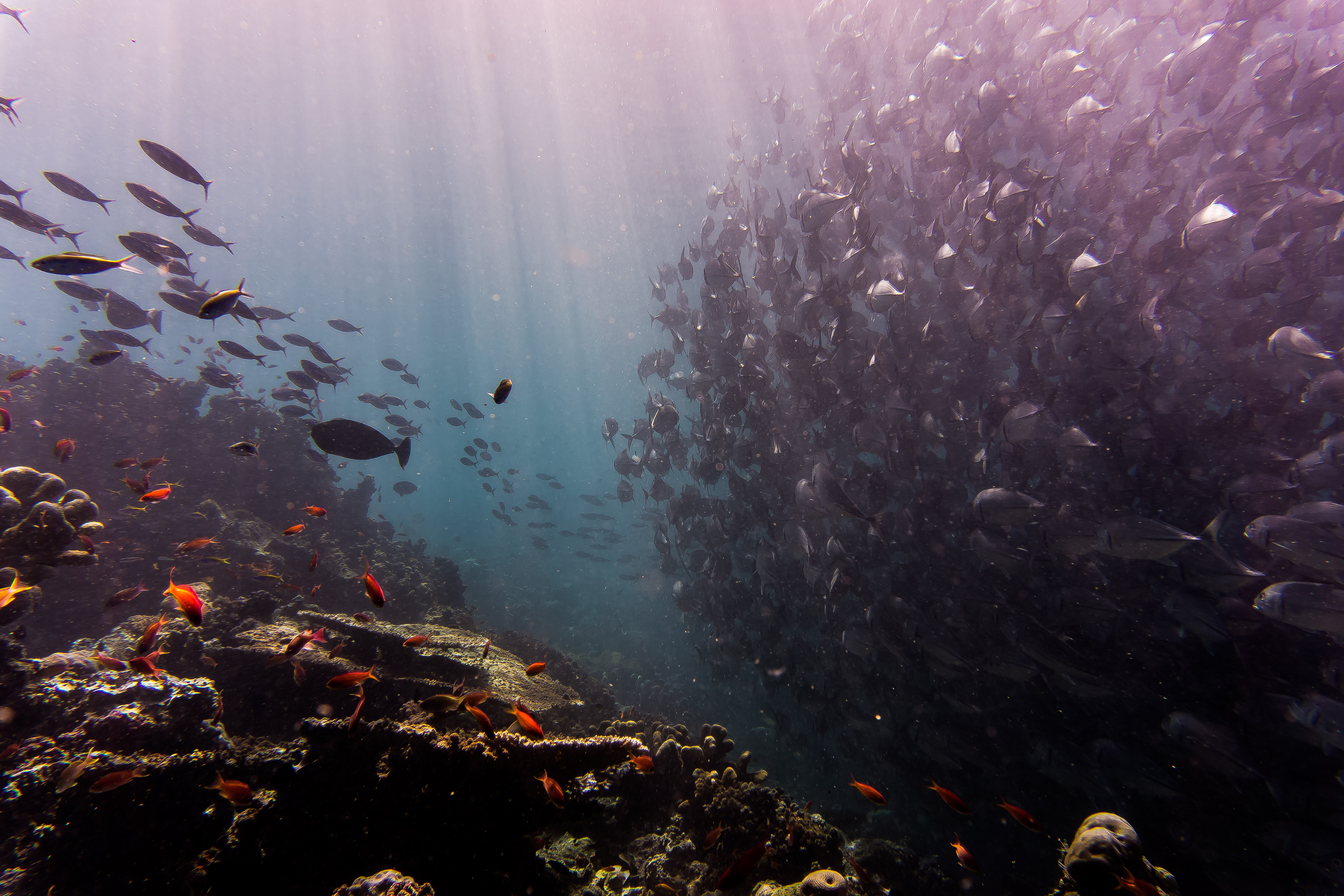 fishes, oceans