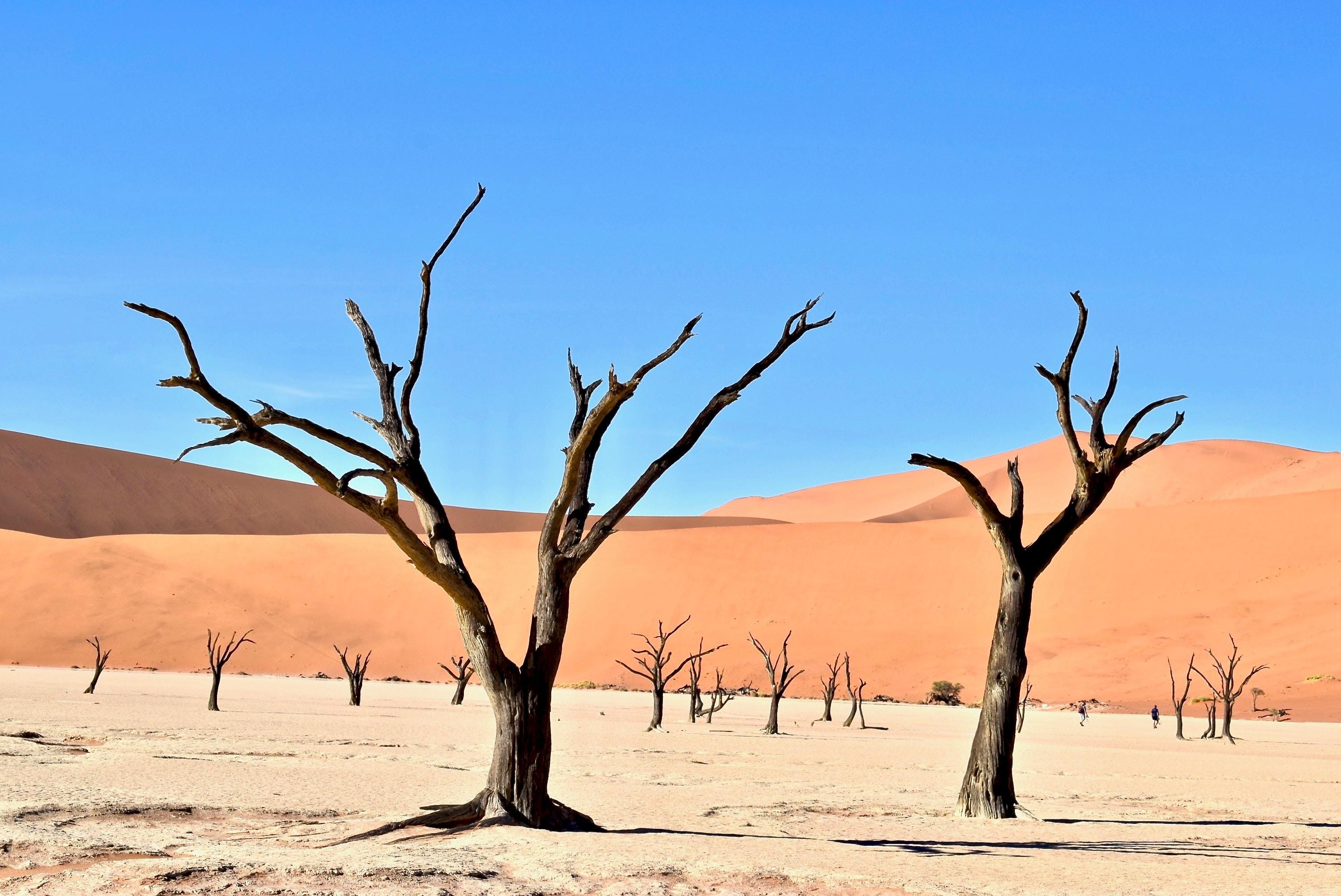 Deserto Dead Vlei, Sossusvlei,