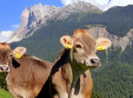 La tua vacanza in un maso eco-friendly del Trentino Alto Adige