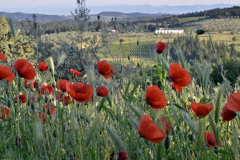 Biodiversità, natura incontaminata, viva e generosa, attorno ad Ancora del Chianti, un b&b eco-sostenibile tra le colline del Chianti