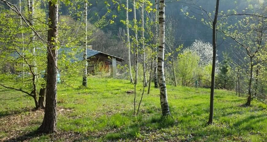 B&B Casa Payer: Colazioni vegane e vegetariane in mezzo al bosco