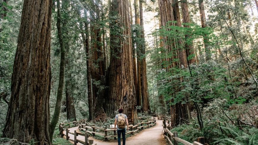 Camminare nella natura allontana lo stress e migliora la creatività
