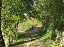 Il bosco vicino al relais Aunus