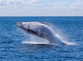 osservazione delle balene vicino all'eco-glamping di Tarifa