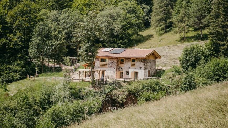 odomi maso nel bosco in Trentino