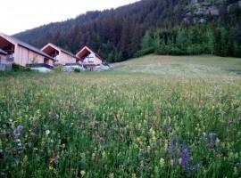 Scorcio di prato fiorito a Weissensee, Carinzia, Austria