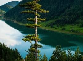 Itinerario nel Parco Nazionale di Tara, Serbia