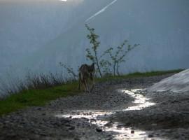 Avvistare animali selvatici a Limone Piemonte